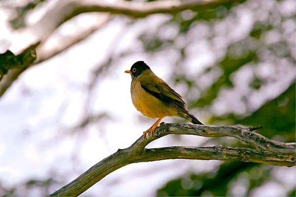 South American Birds 048 Photography Art | Cheng Yan Studio