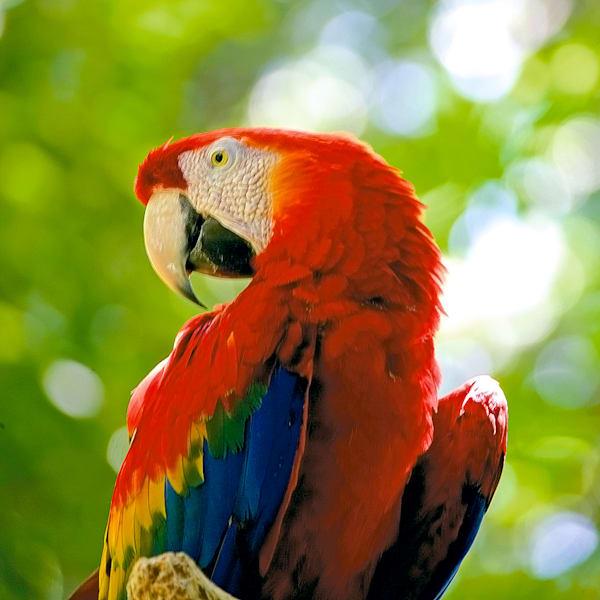 South American Birds 063 Photography Art | Cheng Yan Studio