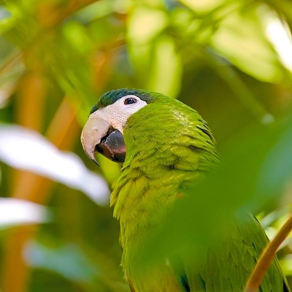 South American Birds 064 Photography Art   Cheng Yan Studio