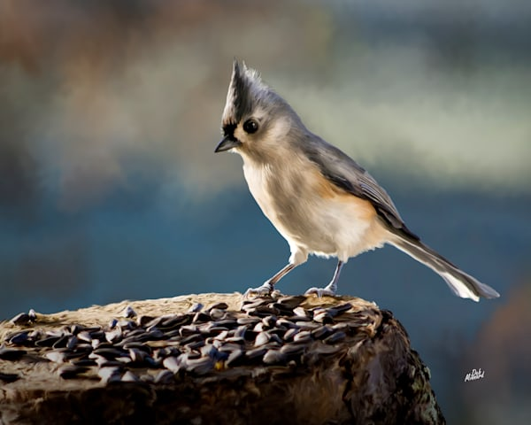 Digital art painting of a bird called a titmouse