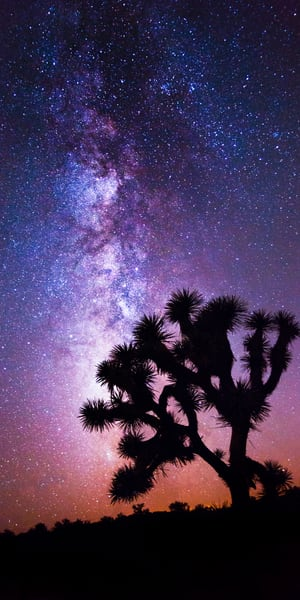 Midnight Bloom, Joshua Tree Night Photography Fine Art Print