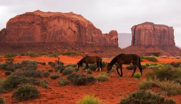 Wild Mustang Herd, Monument Valley Photo Print