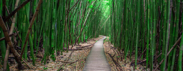 Zen, Bamboo Forest Maui Fine Art Photo Print