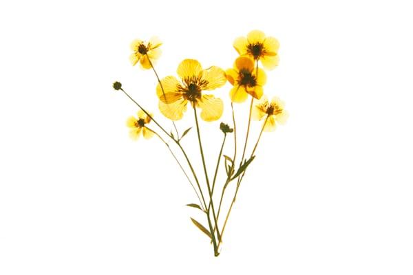 Harriet's Flowers No.3