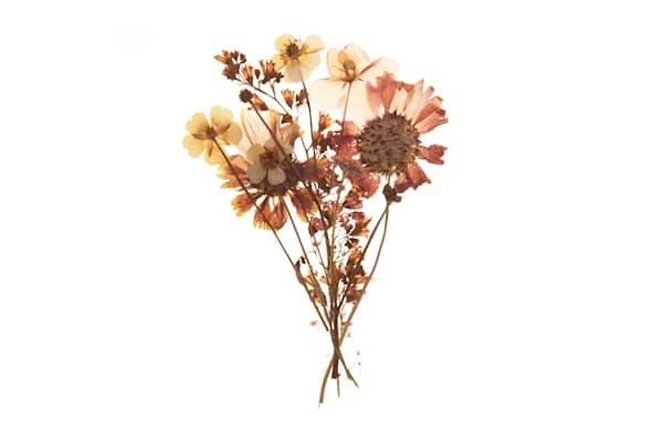 Harriet's Flowers No.5