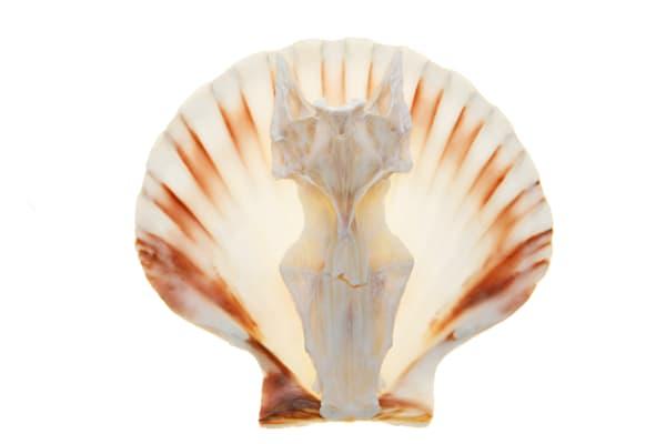 Shell and Fish Skull