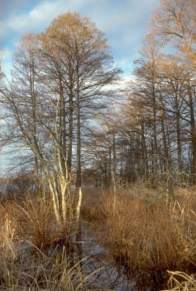 Reel Foot Lake