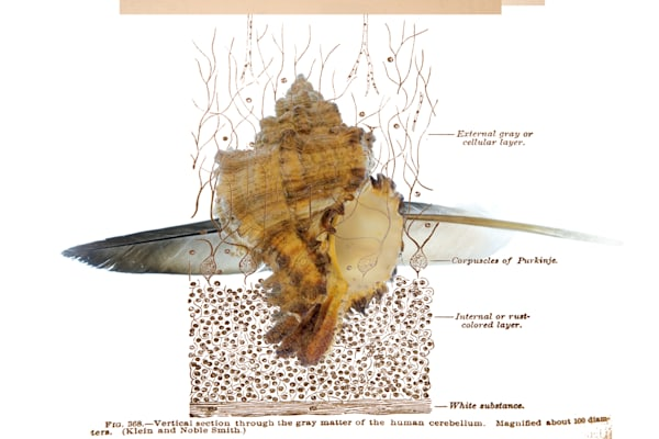 Feather and Shell No.1