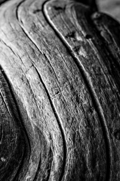 Detailed Black and White Branch Photograph For Sale As Fine Art