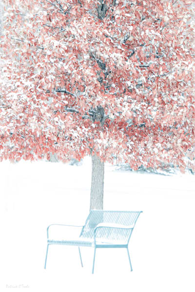 Red Tree In Snow Photography Art | Patrick O'Toole Photography, LLC