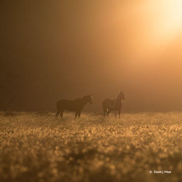 Wild Horses Square