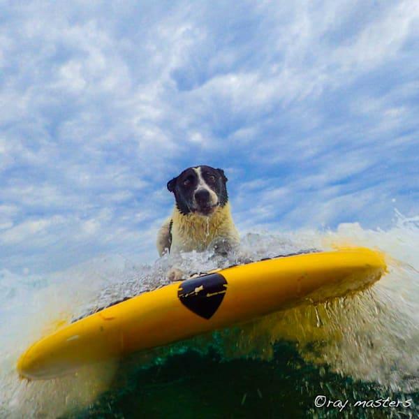 SUP Surfer Sevin