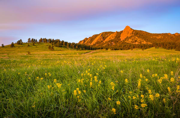 Landscape Photo of Boulder Flatirons Sunrise - Field of Yellow Wildflowers