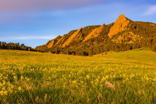 Photo of Boulder Flatirons Sunrise Field of Golden Banner Wildflowers