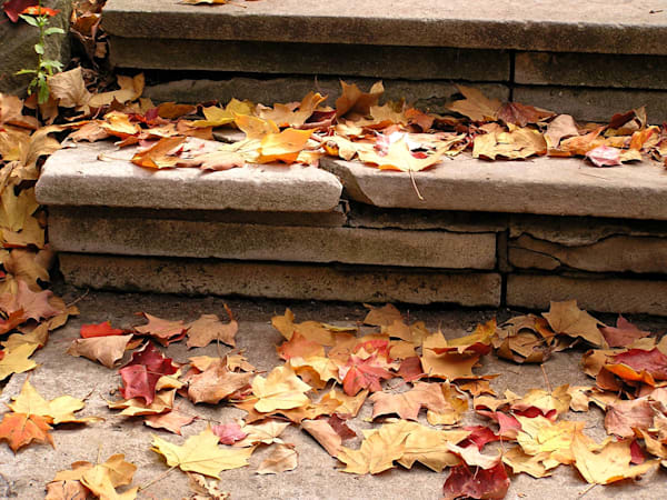 Steps Covered in Autumn Colors