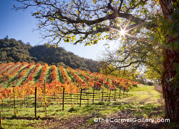 Sunlit Morning Wine Country