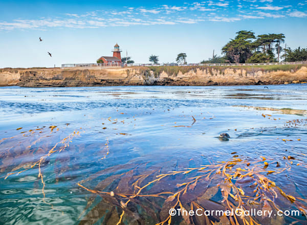 Santa Cruz Harbor Morning Art | The Carmel Gallery
