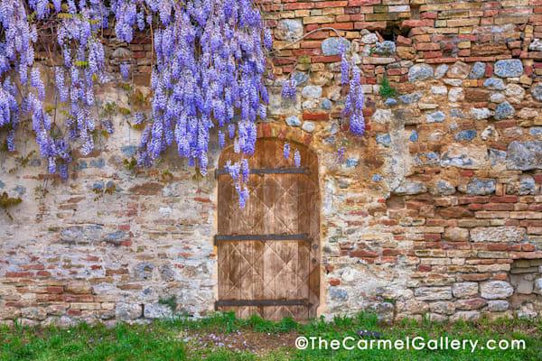 Wisteria Wall Tuscany Art | The Carmel Gallery