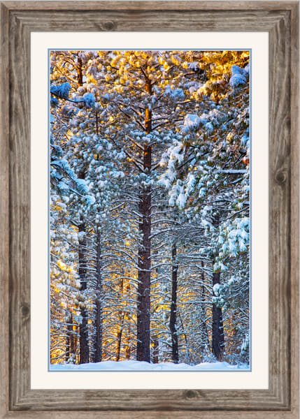 Filtered Sunrise (161622LNND8) Deschutes National Forest Photograph for Sale as Framed Fine Art Paper Print