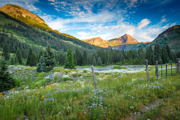 Mountain Flowers Photography Art | Patrick O'Toole Photography, LLC