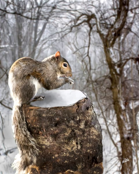 Winter Squirrel Art | MDM photo