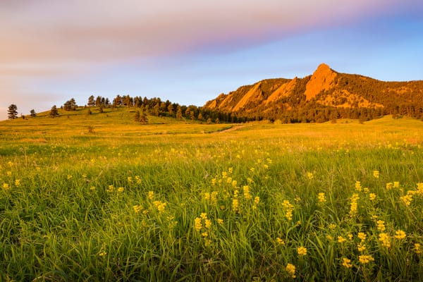 Photograph of Boulder Colorado Flatirons & Golden Banner Wildflowers