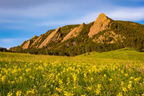 Photo of Boulder Colorado Flatiron Mountains, Yellow Wildflowers
