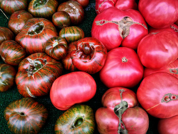 photograph of red heirloom tomatoes