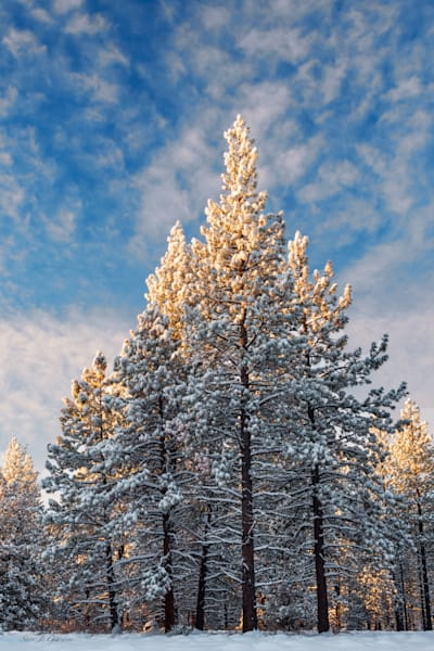 Winter Snow Tree (161625LNND8) Photograph for Sale as Fine Art Print
