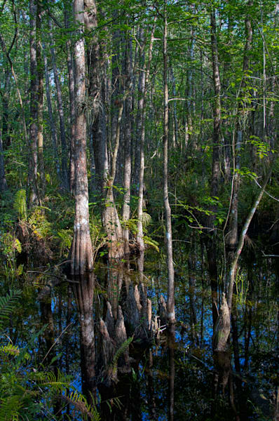 Six Mile Cypress Slough Preserve, Fort Myers