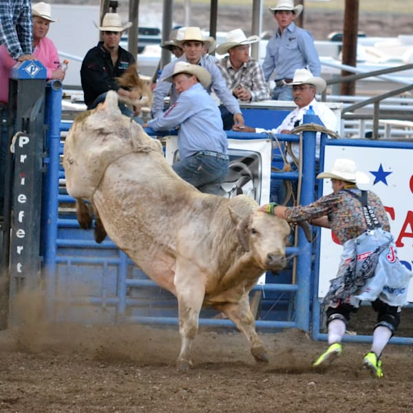 Photograph of a bullfighter laying hands on a bull for sale as Fine Art