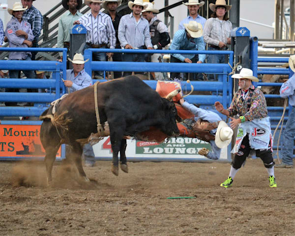 Photograph of a bucking bull tossing a rider to a bullfighter at the ready for sale as Fine Art