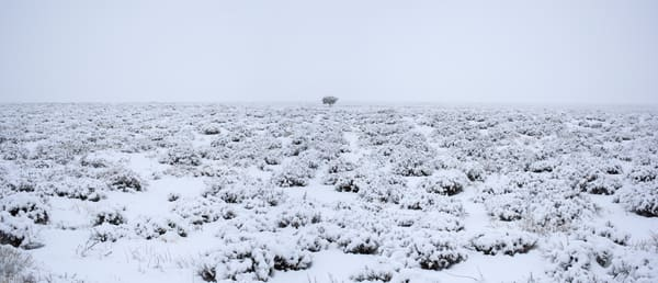 Lone Tree - Monument Valley Winter Photo Panoramic print