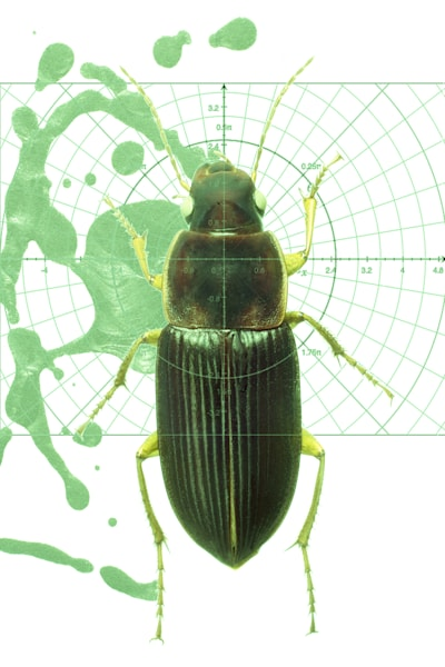 Beetle No.3