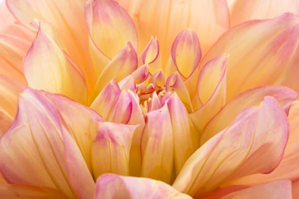Impressive Photograph of a Flower in Bloom | Susan Michal Fine Art