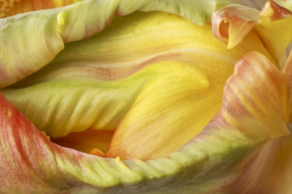 Imposing Photograph of a Flower Bud | Susan Michal Fine Art