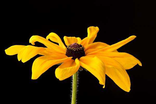 Charming | Photograph of a Sunflower | Susan Michal Fine Art