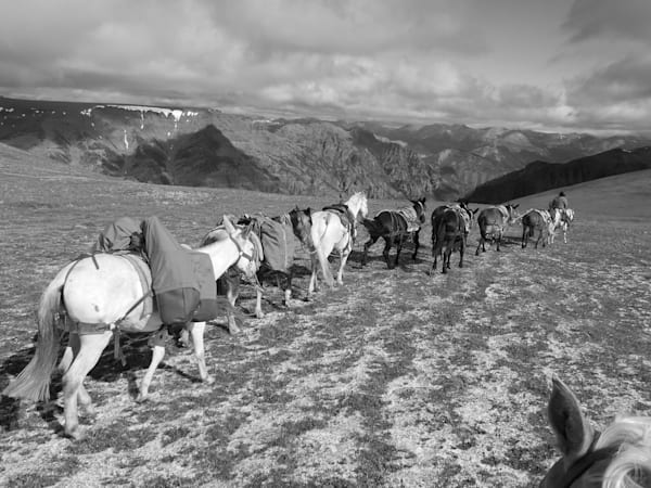 Black and White Photograph of a mule string on Cougar Pass for sale as Fine Art