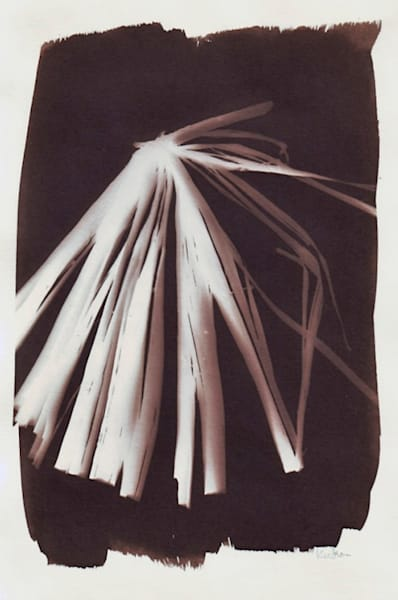 Palm Frond Art   Photographic Works and ArtsEye Gallery