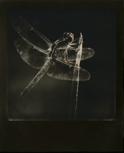 3rd Place: Dragonfly Art   Photographic Works and ArtsEye Gallery