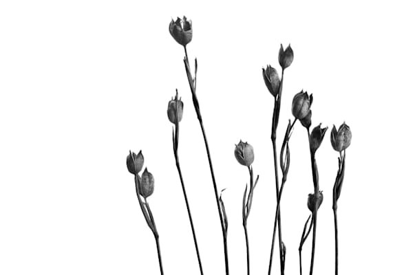 Family Photograph of Flowers | Susan Michal Fine Art
