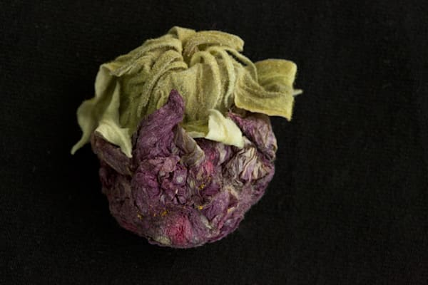 Fuzzy Photograph of a Withered Bud | Susan Michal Fine Art