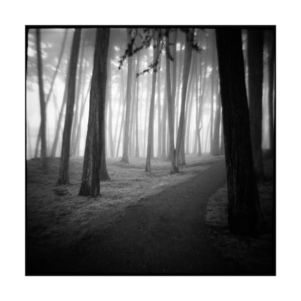 Foggy Pathway  Art   Photographic Works and ArtsEye Gallery