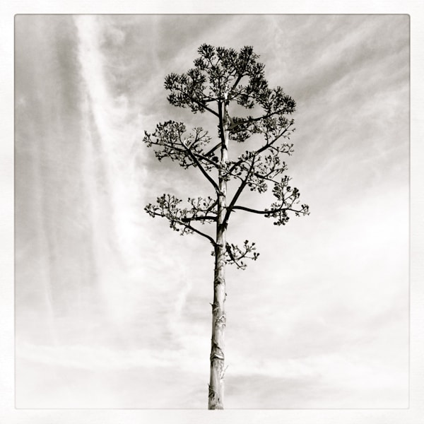 Agave 2013 Art | Photographic Works and ArtsEye Gallery