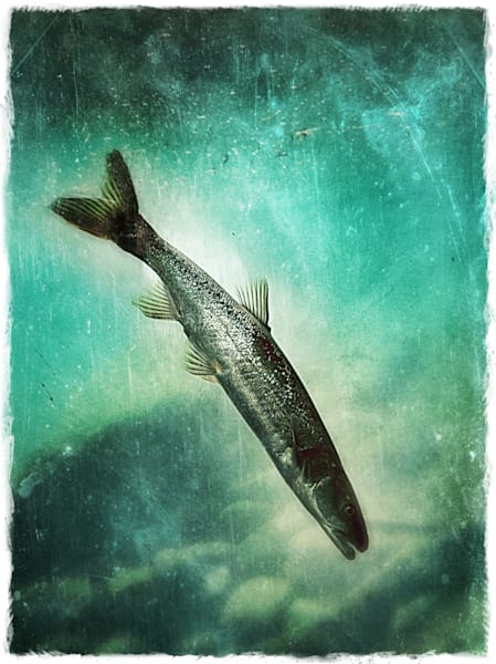 Descending To The Depths Of My Soul Art | Photographic Works and ArtsEye Gallery