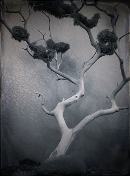 Lobby Bonsai From The Four Hours Series Challenge  Art | Photographic Works and ArtsEye Gallery