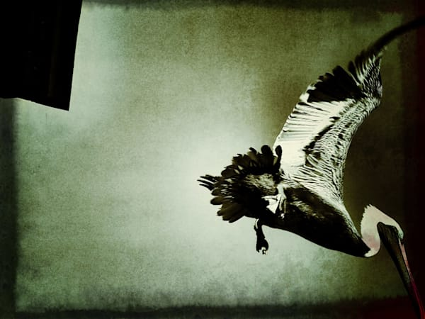 3rd Place: Leap Of Faith Art   Photographic Works and ArtsEye Gallery