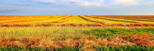 Golden Aisles   Estevan, Saskatchewan Photography Art | Byron Fichter Fotography