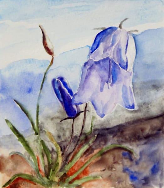 Greenland Bluebells