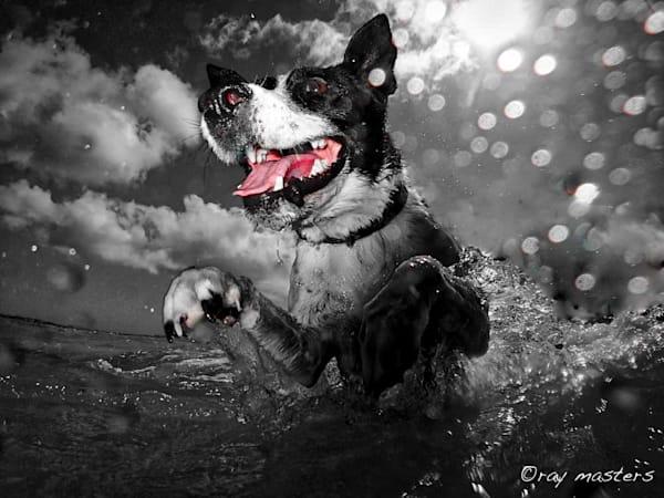 Oh Happy Dog